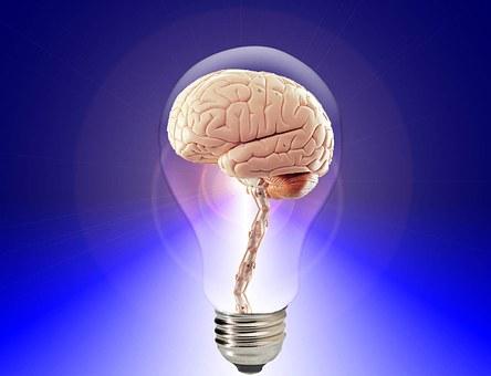 brain-20424__340